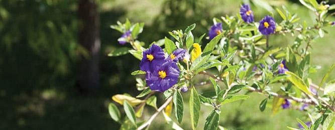 Flore de Méditerranée