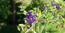Flora des Mediterraneans