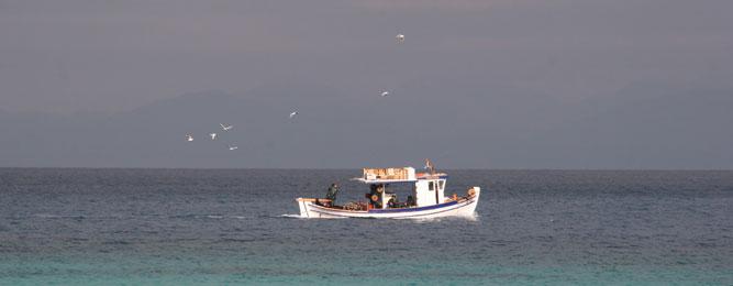 Θαλάσσια αλιεία